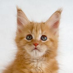 м-кр-кошка-DSC_1830