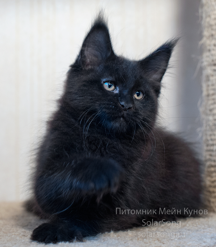 кот-чёрный-солид1