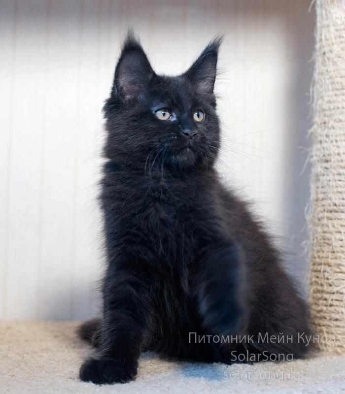 кот-чёрный-солид2