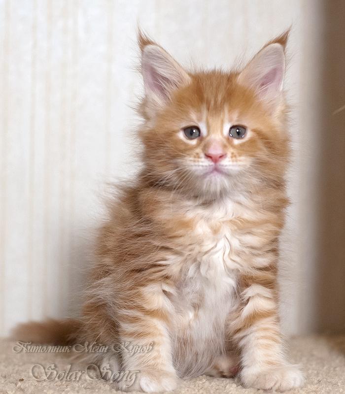 кошка-два2