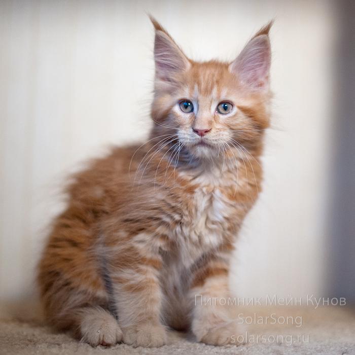 кошка-солид.1jpg