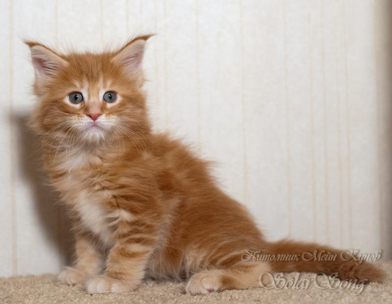 кошка-три1