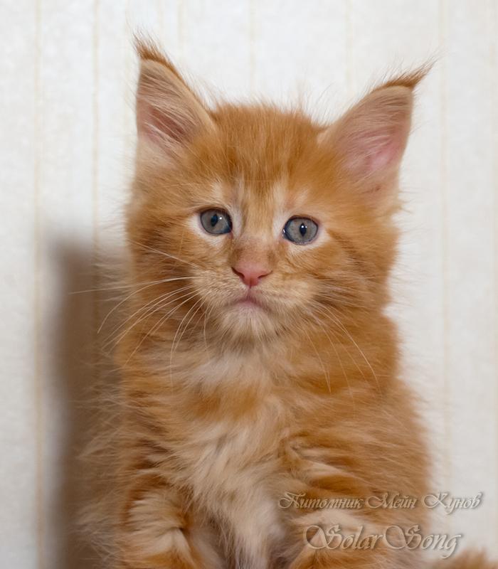 кошка1солид2