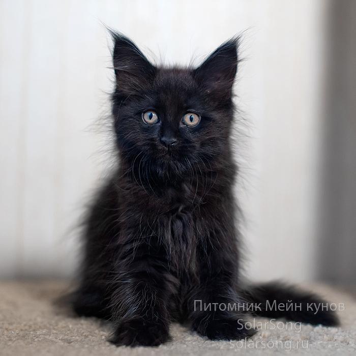 чёрная-кошка1