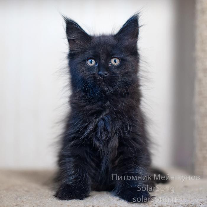чёрная-кошка2