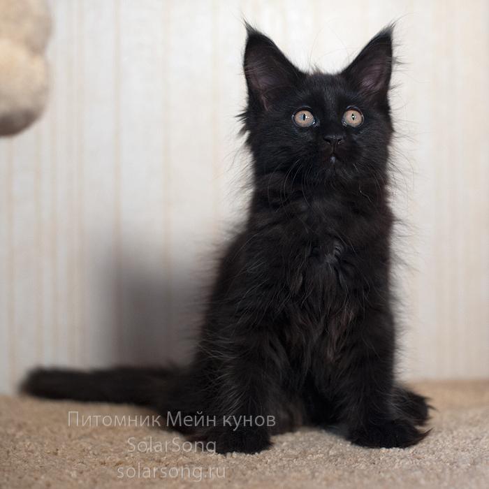 чёрная-кошка