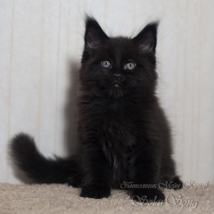 чёрн-кот2