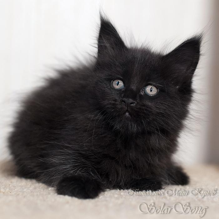 0кошка-чёрн