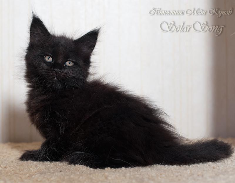 1кошка-чёрн