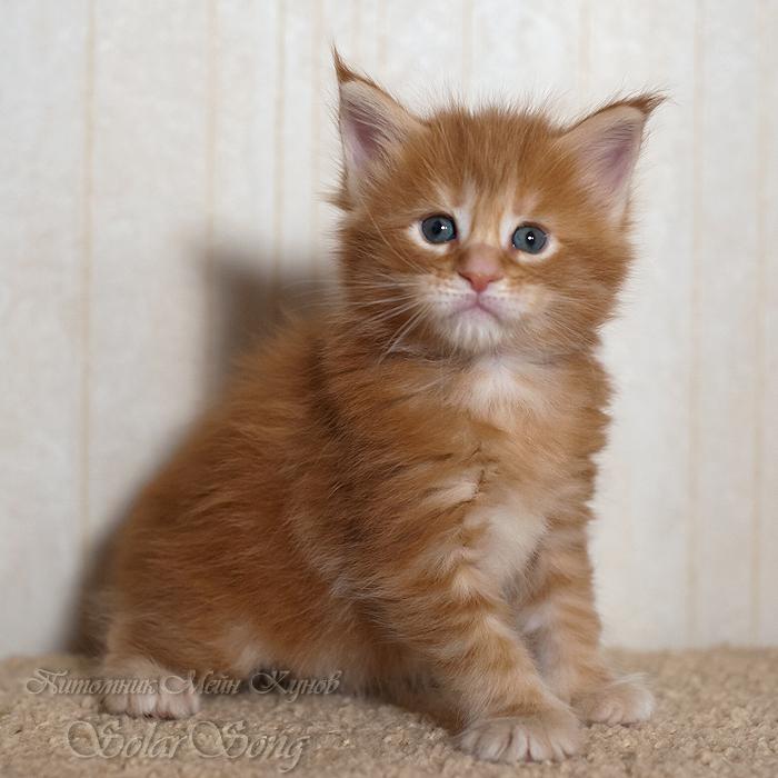 3-кошка1