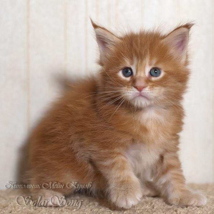 3-кошка2